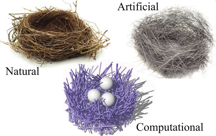 A diagram showing three types of nests